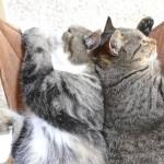 温くて涼しいハンモック、背中合わせて2匹の猫が