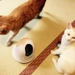 「幻の猫」の姿を外から見られる、移動可能な遠隔多機能カメラ