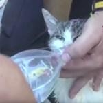 イタリア地震の5日後に子猫を救出、瓦礫の下から