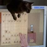 盤面でリアルに戦うサビの猫、自陣の駒にも猫パンチ