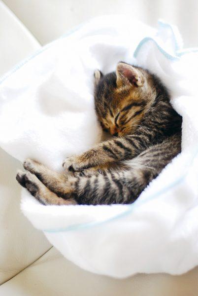 161004milkvolunteer02 402x600 - 預かる命の変わらぬ重さを知る一冊、『赤ちゃんネコのすくいかた』