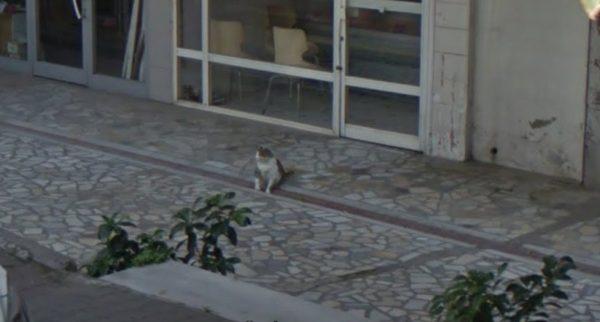 161005tombilI 600x322 - 銅像になった猫のTombili、生前の姿がストビューで発見される