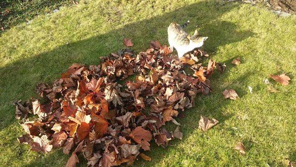 161011cat 600x338 - 紅葉の山に戯むる猫たち、秋の訪れ伝える音色