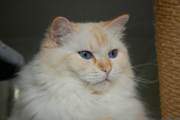 161016cat 600x400 - 本日の美人猫vol.208
