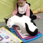 猫と赤子の争奪戦、一瞬の隙に持ち去られ