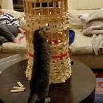 猫による巧みなビルの垂直破壊、壊さず入って中から発破