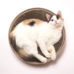 バリバリしたりゴロゴロしたり、すり鉢状の爪とぎ付きの猫ベッド