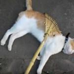 かっこめかっこめ猫の背を、猫も運気も引き寄せて