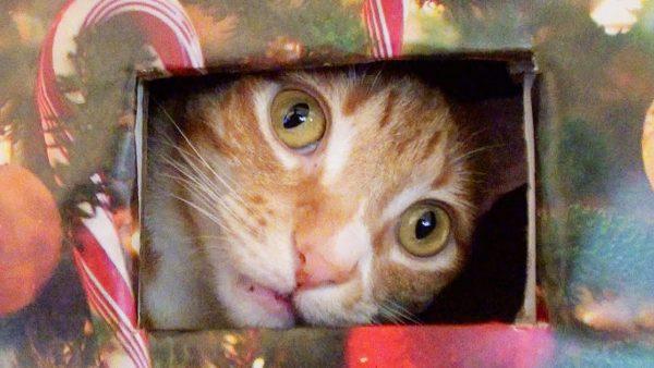 161115cattree 600x338 - 猫と人のお互いの幸せのために、猫の遊び場をクリスマスツリー化