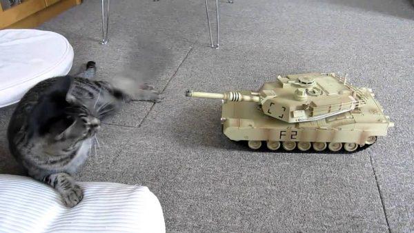 161124tankvscat 600x338 - 高速パンチと戦車の戦い、お互い譲らず前線膠着