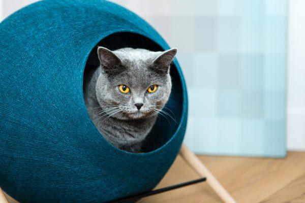 161211meyouparis03 600x400 - フランス発の洗練デザイン猫ベッド、日本でも2017年1月中旬販売開始に