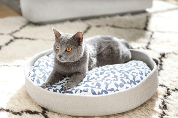 161211meyouparis05 600x400 - フランス発の洗練デザイン猫ベッド、日本でも2017年1月中旬販売開始に