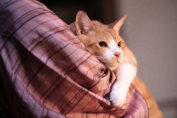 161212kintoki01 600x400 - 抱かれる姿は甘える家猫、その正体は猫忍