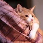 抱かれる姿は甘える家猫、その正体は猫忍