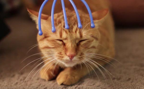 161218headmassage 600x372 - 見る見るうちに微睡む猫、眠気の理由はあの道具