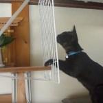 荒神様を狙う黒猫、網に手をかけ実力行使