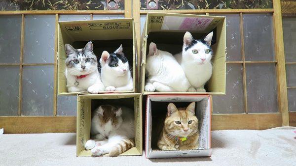 160105cats 600x338 - 箱は4つに猫は6匹、軽量紙製猫マンション