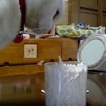 猫が引っぱる綿棒のアレ、花火のように大炸裂