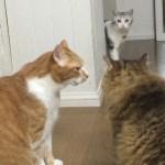 喧嘩の渦中に通り行く猫、予想通りのもらい事故