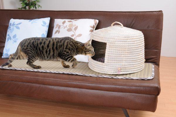 170113nekochigura01 600x399 - い草を用いた猫ちぐら、ソファの上にも意外と似合う