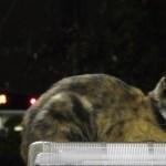 夜のお勤め三毛猫駅員、降りゆく人の背中を見送り
