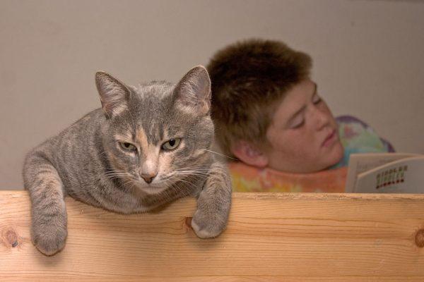 170120cat 600x400 - センター英語に猫が登場、内容よく見りゃ「猫の名は」