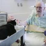 ICUで患者を回診、スタッフも癒やすセラピー猫