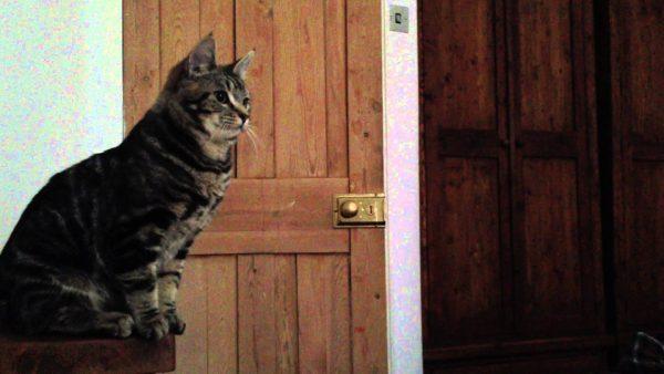 170203 600x338 - 猫の目覚まし時間は正確、狙い定めてジャンピング