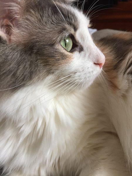 170204yaya 450x600 - 本日の美人猫vol.223