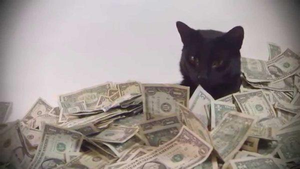 170207catincash 600x338 - マネーの海に泳ぐ黒猫、潜って滑って肩まで浸かって