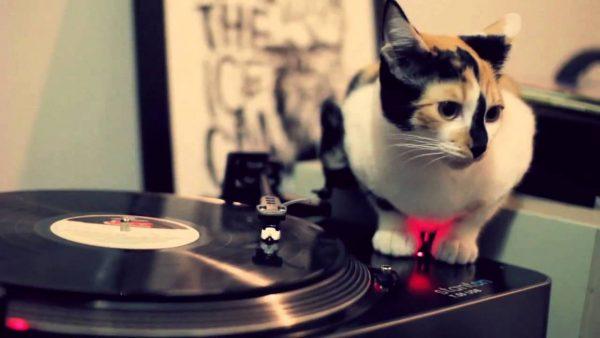 170216DJCAT 600x338 - DJ三毛猫アナログ派、こすって回して魅せるスタイル