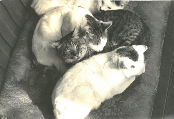 170219osaragi03 600x412 - 500匹以上の猫と暮らした作家の猫写真展、2/22猫の日から開催
