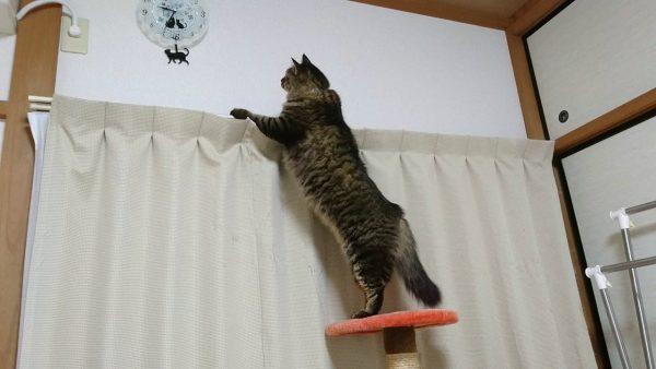 170220cat 600x338 - シッポを振り振り時計を見る猫、振り子の猫に吸い寄せられて