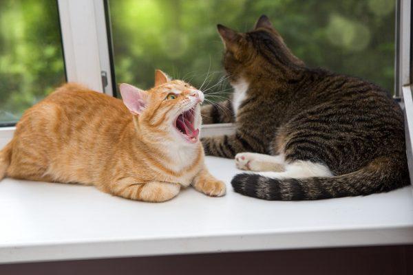 170222catday 600x400 - 2017年も2/22は猫の日祭り!各所の猫祭りまとめ【追記あり】