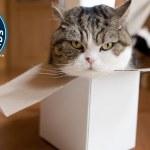 ズサ猫まる、YouTubeで最も多く見られた動物としてギネスに認定