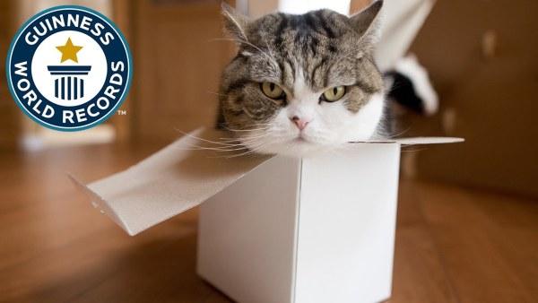 170327maru 600x338 - ズサ猫まる、YouTubeで最も多く見られた動物としてギネスに認定