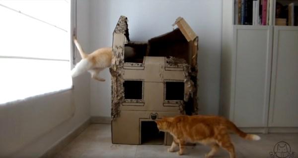 170404cathouse 600x320 - 段ボール製の猫ハウスを、3匹の猫が1年間使うとこうなる