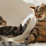 猫と同じ高さの視点で、猫の昼寝を撮るとこうなる