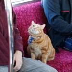 相鉄そうにゃん実写で登場、ゆるキャラではなく本物の猫
