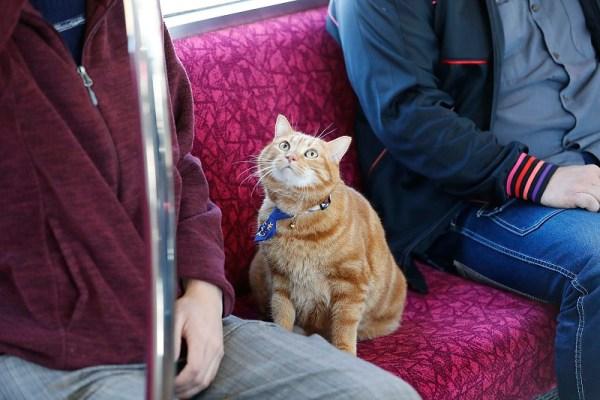 170415sounyan 600x400 - 相鉄そうにゃん実写で登場、ゆるキャラではなく本物の猫