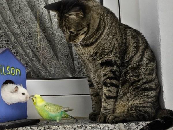 170418catwithbirdandhamster 600x451 - 違ってもお互い認め合う世界、猫もハムもインコも仲良し