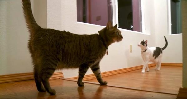 170425cats 600x318 - 2匹の猫の建物探訪、シッポを立てて興味津々