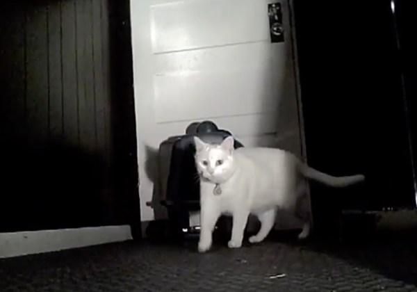 170429catescape 600x420 - トイレを倒して脱走する猫、暗視カメラにその一部始終が