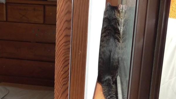 170619cat 600x338 - 猫による日向ぼっこの新形態、猫しか入れぬサンルーム