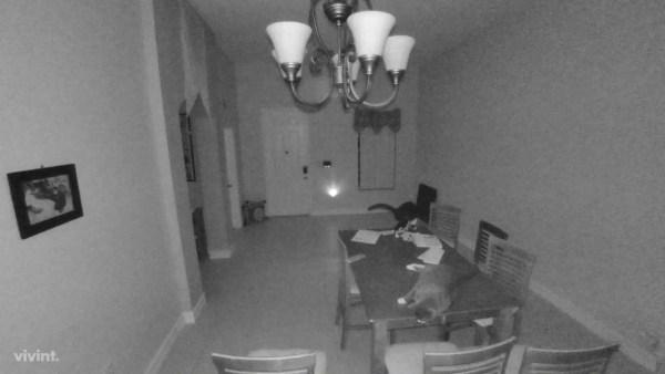 170730cat 600x338 - 肉球で額縁落とした横たわる猫、警報鳴らして人を走らす