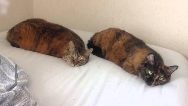 170731cats 600x338 - シンクロ添い寝の芋虫猫、じっと動かず目でものを言い