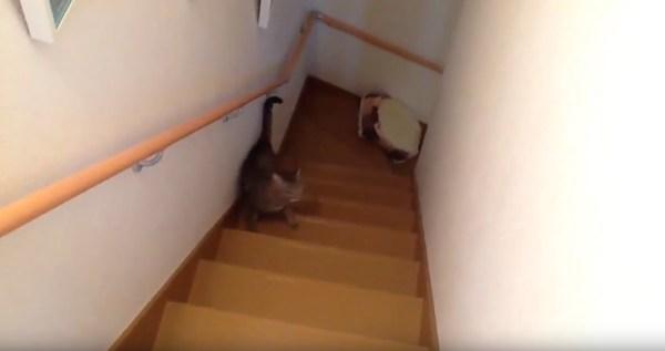 170823catbed 600x317 - 階段をベッドを咥えて上がる猫、まさかのトラブルに鳴き声あげる