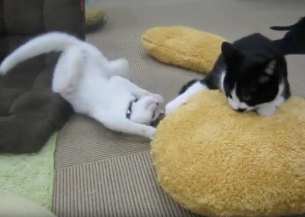 170917catcroquette 600x426 - 特大の猫用コロッケに抱きつく猫、譲らず渡さず独り占め