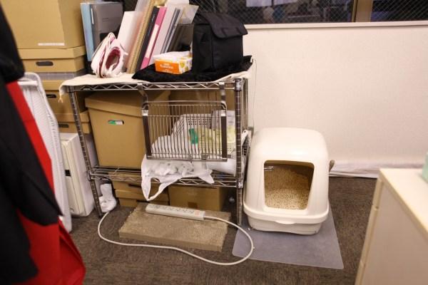 170927 IMG 7381 2000 600x400 - 猫とはたらくvol.01「目的は、猫を職場で飼うことではなく、保護できる猫を増やすため」