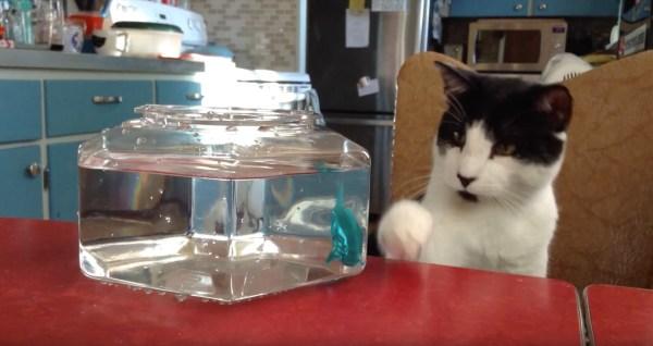 171008HexbugAquabotsvscat 600x318 - カタカタ動く怪しきお魚、見つめる猫は最後に手が出て
